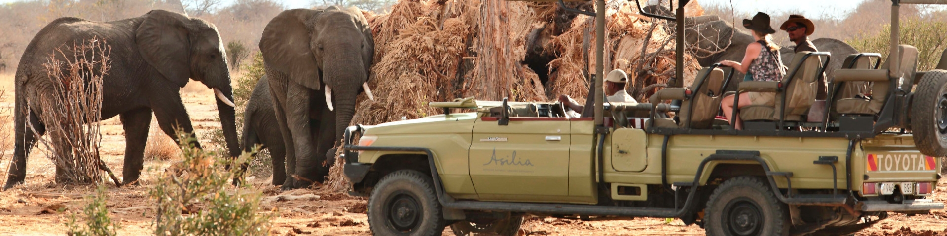 Africa Travel Guide Tanzania Ruaha National Park Elephants Using Old Boabab as Scratching Post