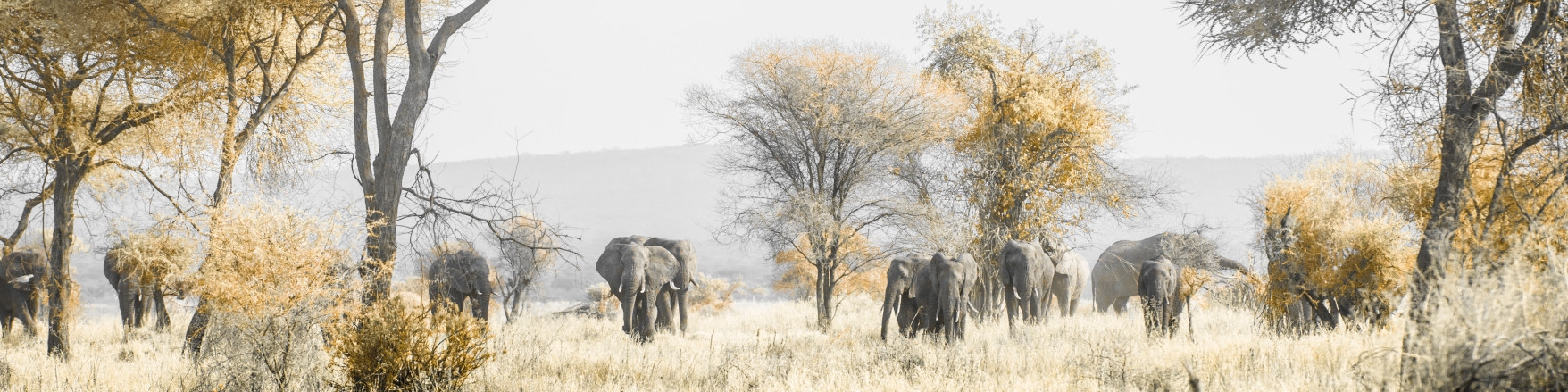 Africa Travel Guide Tanzania Tarangire National Park Elephants on the Move
