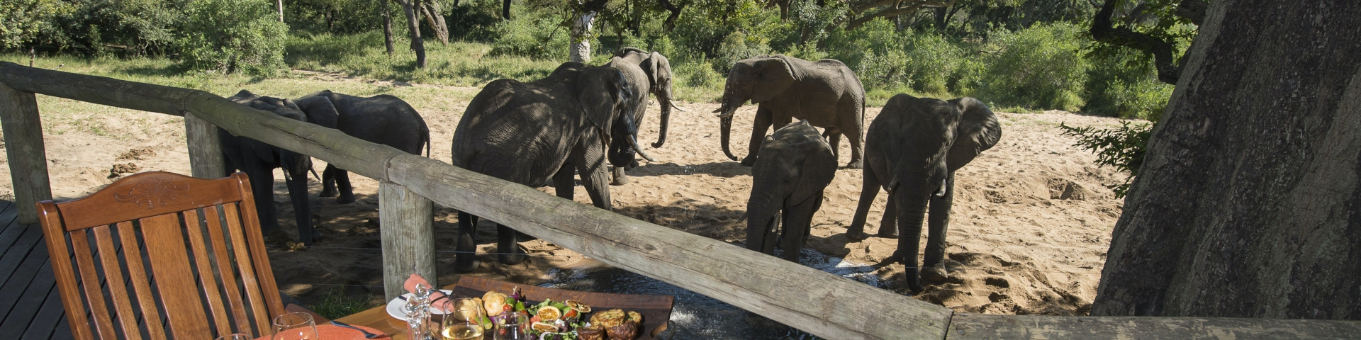 Tintswalo Safari Lodge - Manyeleti Game Reserve - South Africa