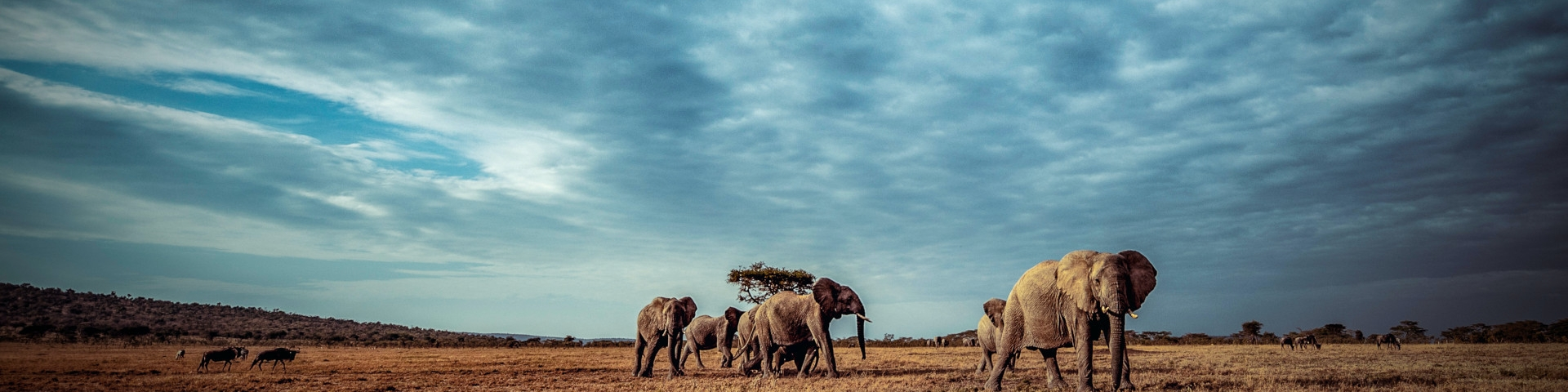 When to Visit Kenya Elephants on the Plains