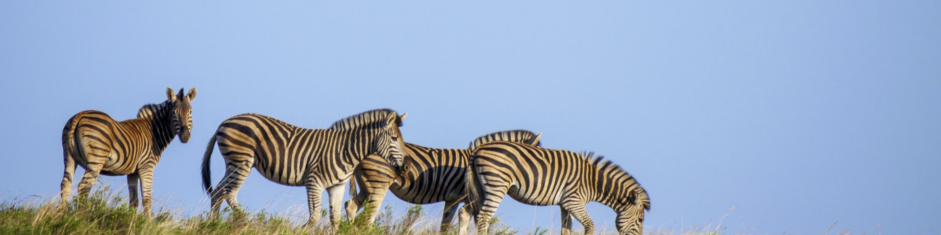 Mpumalanga Province Nkomazi Private Game Reserve Zebra Tours and Safaris