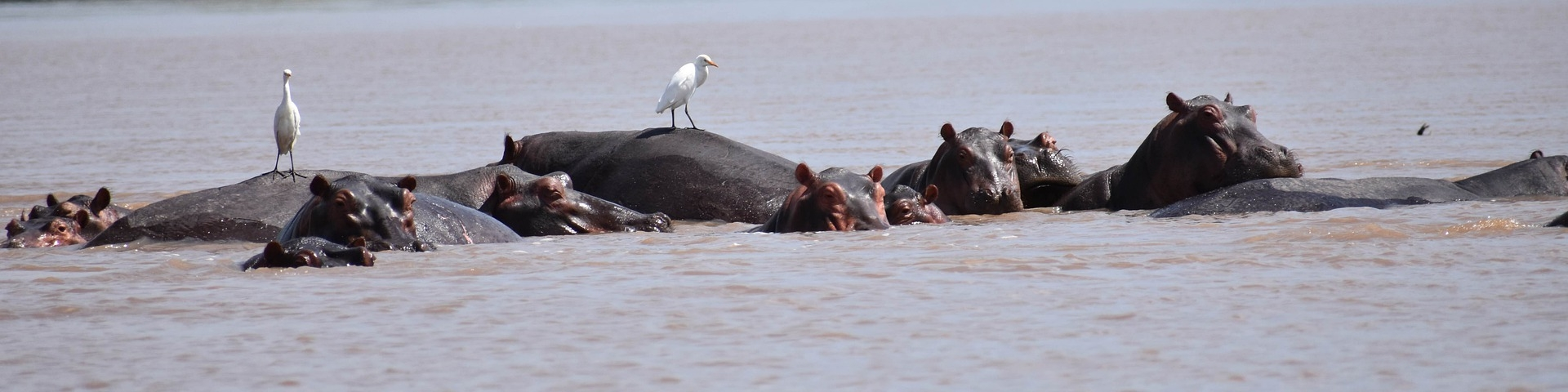Kavango & Zambezi water teem with hippo.