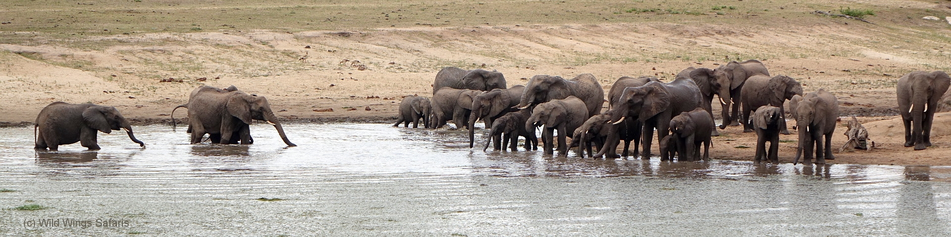 Aberdare National Park Elephants at Waterhole