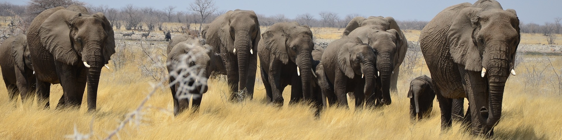 Elephants-in-Namibia
