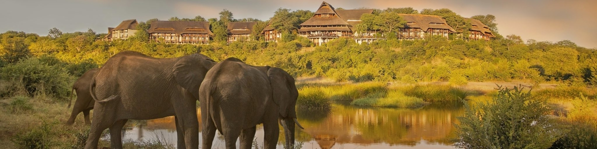 Victoria Falls Safari Lodge elephants in front of lodge banner
