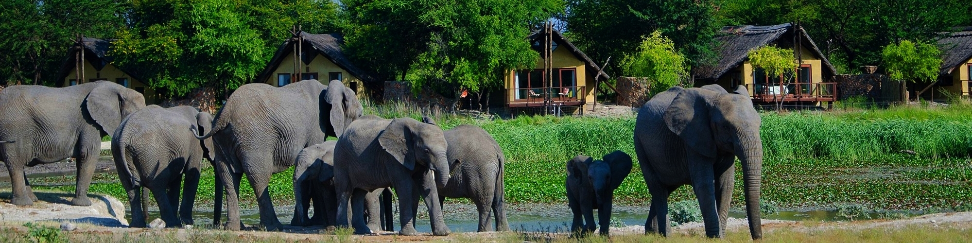 Tau Game Lodge, herd of elephants in front of chalets